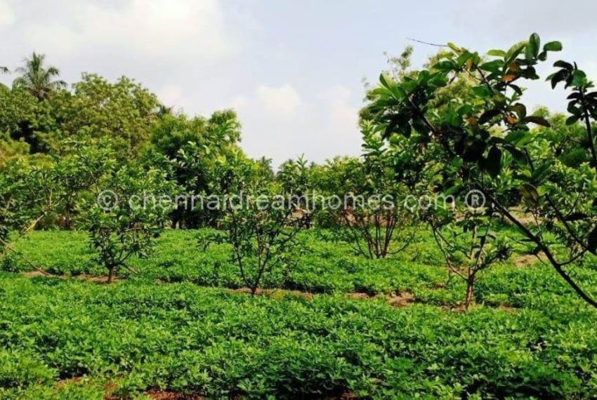 farmland-wm-compressed2