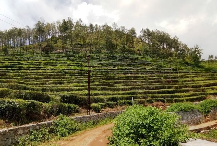 kotagiri plots for sale (4)