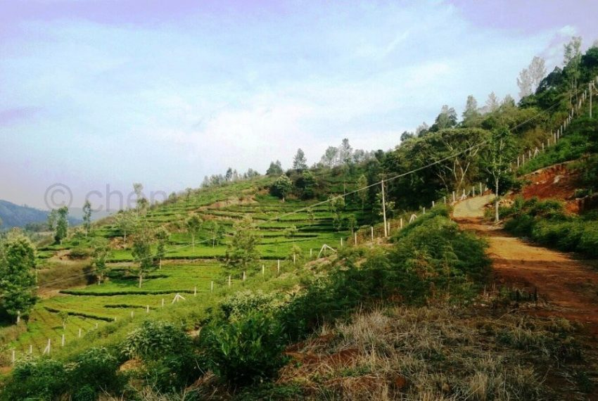 Plots-for-sale-kotagiri (9)