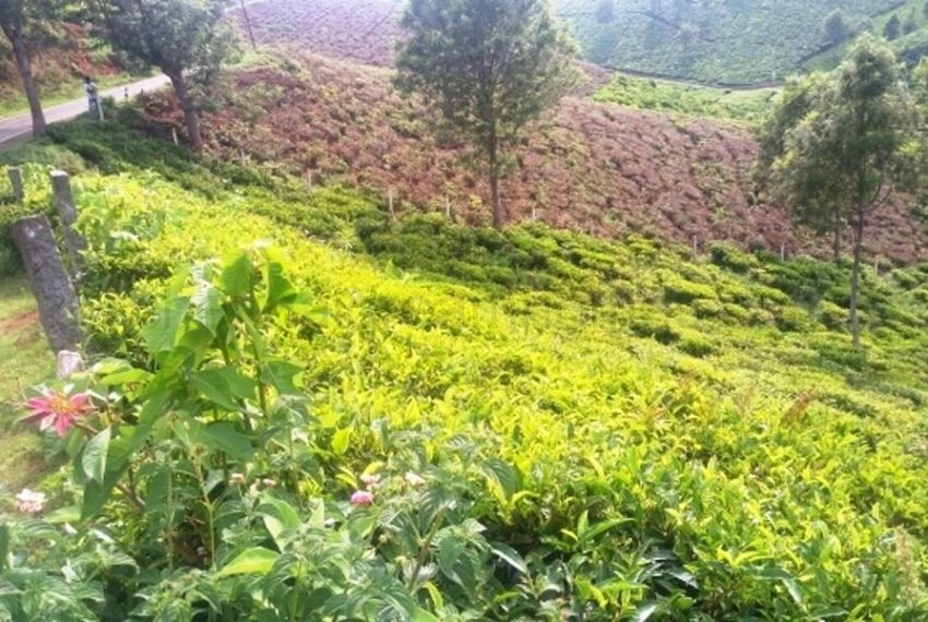 Gated Layout Plots for sale in Coonoor (4)